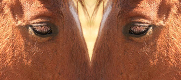Photograph - Horse Eyes Love by James BO Insogna