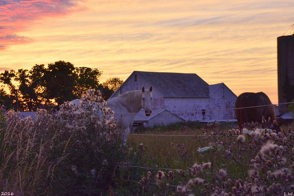 Photograph - Horse Farm At Sunset by Lisa Wooten