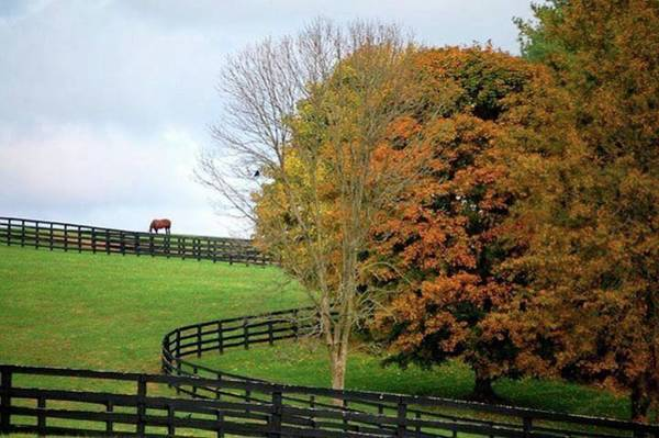 Horse Farm Country In The Fall Art Print