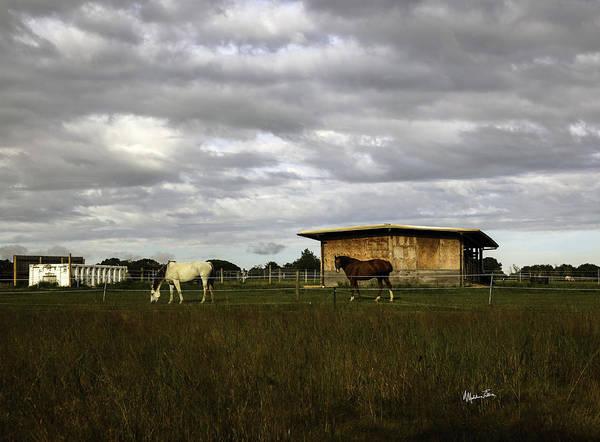 Wall Art - Photograph - Horse Farmland - Bridgehampton - Ny by Madeline Ellis