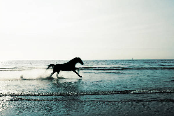 Photograph - Horse by Fine Arts