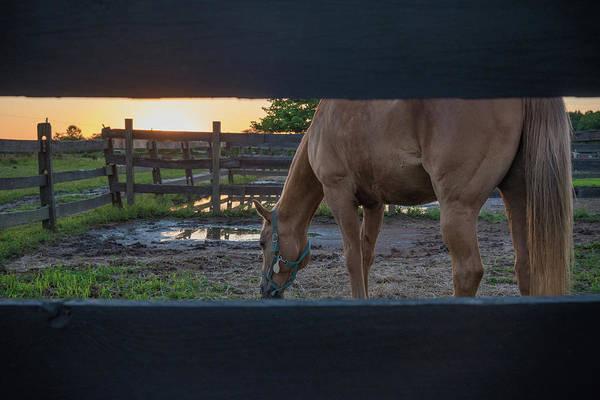 Photograph - Horse Frame by Kristopher Schoenleber