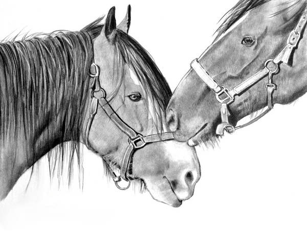 Wall Art - Drawing - Horse Friends by Joyce Geleynse