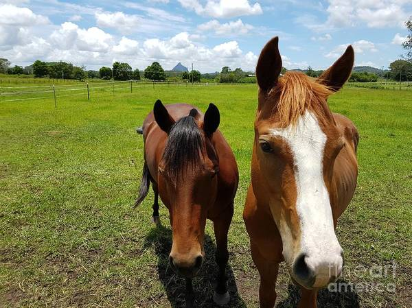 Photograph - Horse Friendship by Cassy Allsworth