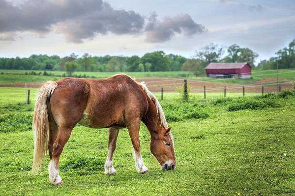 Photograph - Horse Grazing In A Field On A Maryland Farm In Spring by Patrick Wolf