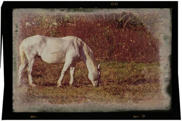 Photograph - Horse Grazing by John Benedict