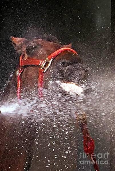 Photograph - Horse Happy 3 by Jenny Revitz Soper
