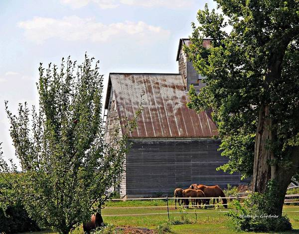 Photograph - Horse Haven by Matalyn Gardner