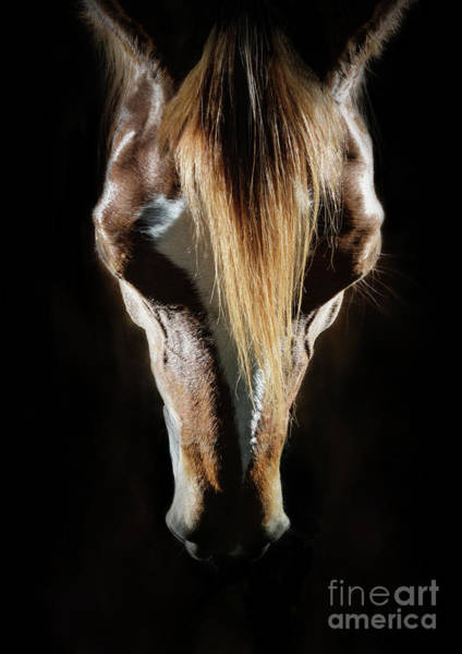 Photograph - Horse Head Portrait by Dimitar Hristov