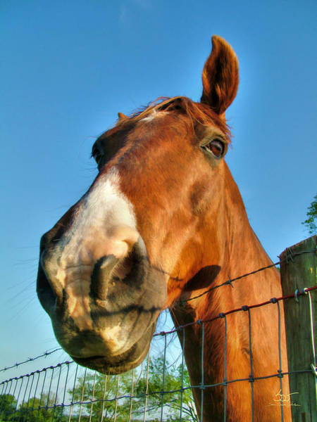 Photograph - Horse Head by Sam Davis Johnson