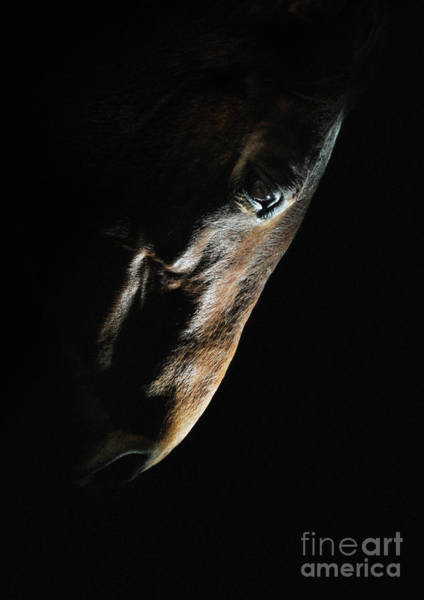 Photograph - Horse Head Strobist Art Portrait by Dimitar Hristov
