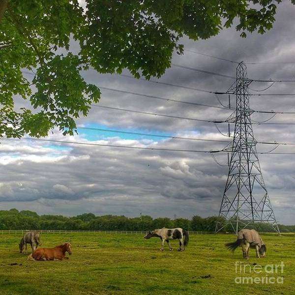 Mammals Wall Art - Photograph - #horse #hobby #horses #equine by Abbie Shores