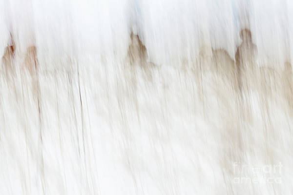 Photograph - Horse Hunt #8209 by Andrey Godyaykin