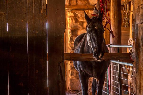 Hogan Photograph - Horse In A Barn by Jon Manjeot