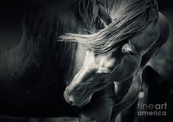Photograph - Horse In Pose Black And White Portrait by Dimitar Hristov