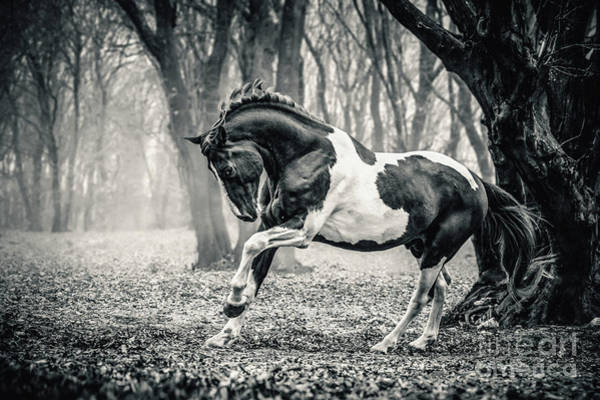 Photograph - Horse In The Forest by Dimitar Hristov