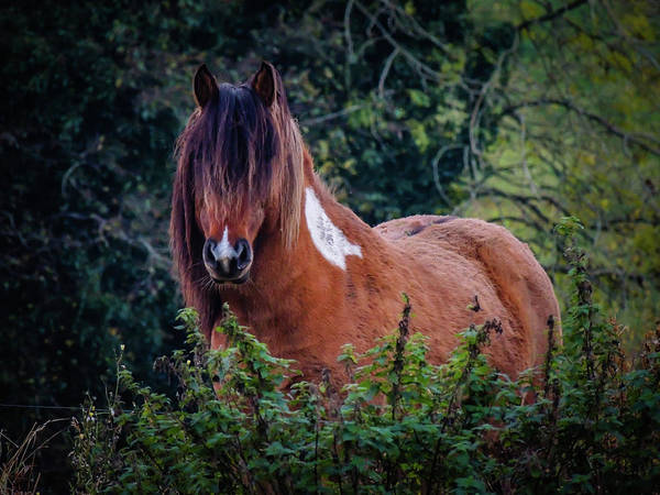 Photograph - Horse In The Irish Countryside by James Truett