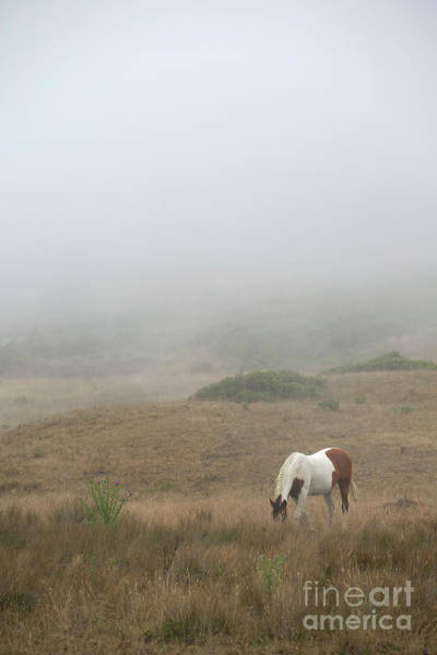 Painted Horses Photograph - Horse In The Mist by Diane Diederich