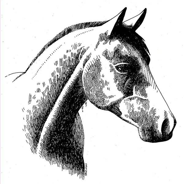 Appaloosa Drawing - Horse Ink by William Krupinski