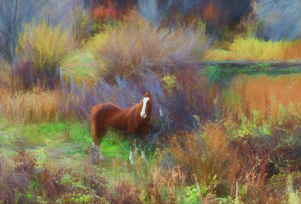 Photograph - Horse Of Many Colors by Jim Cook