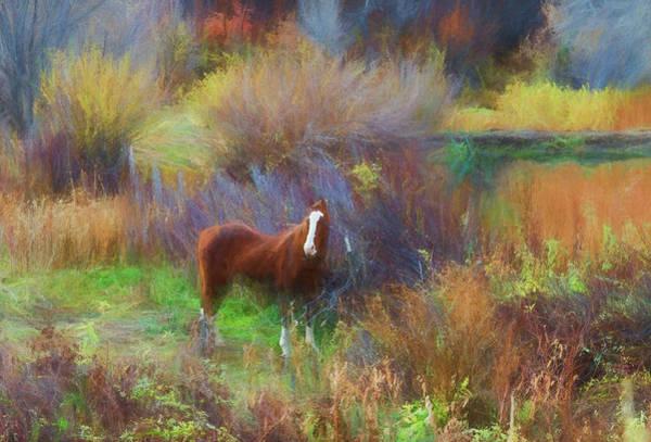Horse Of Many Colors Art Print