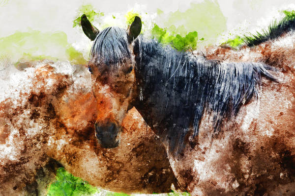 Wall Art - Mixed Media - Horse by Kevin O'Hare