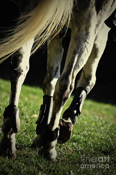 Photograph - Horse Legs Running  by Dimitar Hristov