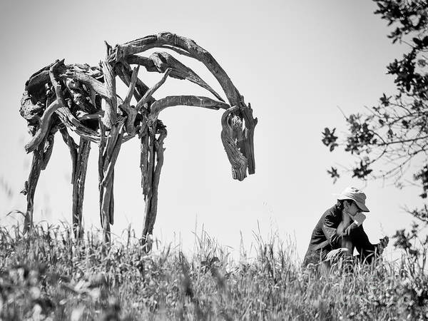 Photograph - Horse Looking Over My Shoulder by Robin Zygelman