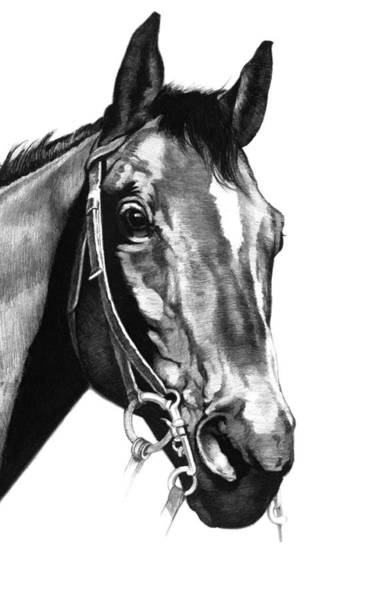 Equine Drawing - Horse Looking To The Right by Harold Shull