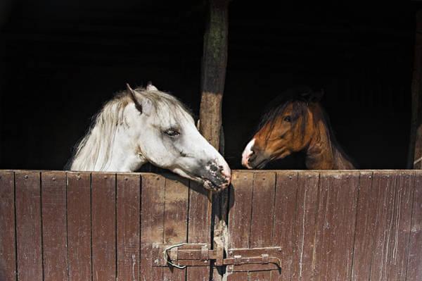 Photograph - Horse Love by Okan YILMAZ