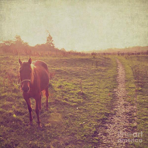 Wall Art - Photograph - Horse by Lyn Randle