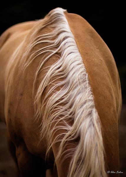 Photograph - Horse Mane by Alexander Fedin