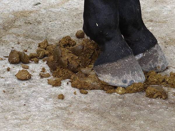 Mixed Media - Horse Manure by Bruce Ritchie