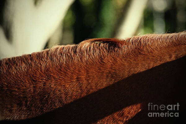 Photograph - Horse Neck by Dimitar Hristov