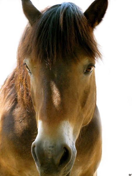 Wall Art - Photograph - Horse Of Course by Debra     Vatalaro