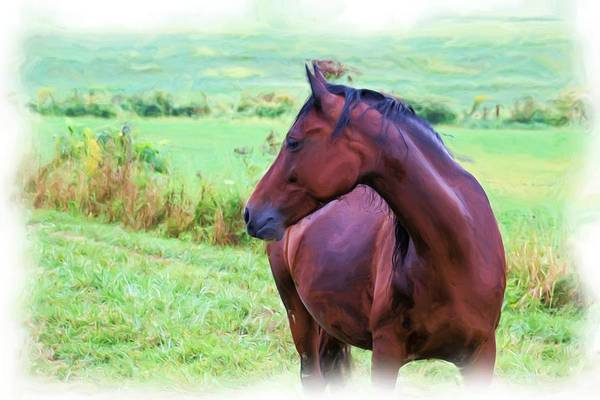 Amish Country Digital Art - Horse Oil Painting by Gary Wilson