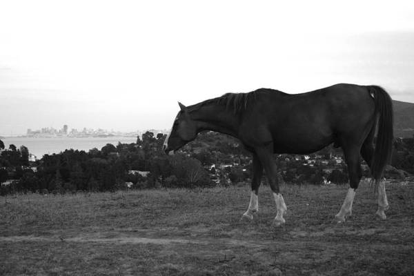 Photograph - Horse On Horse Hill by David Armentrout