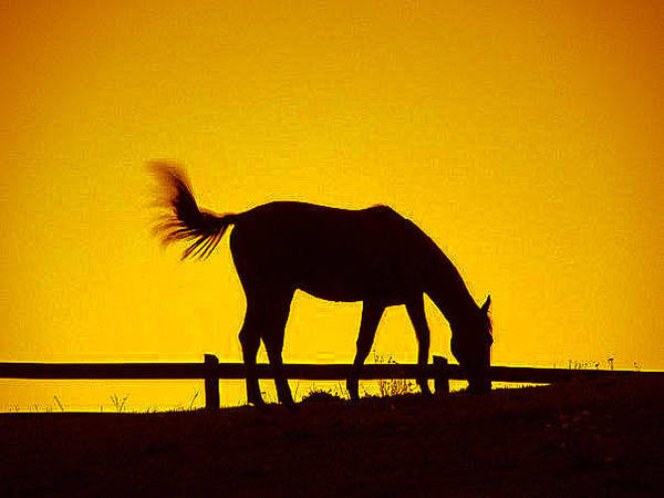 Photograph - Horse On The Hill by CK Brown