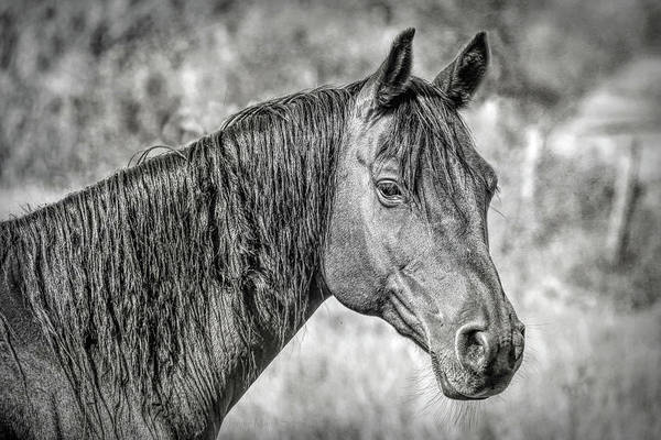 Wall Art - Photograph - Horse Portrait Black And White by Jennie Marie Schell