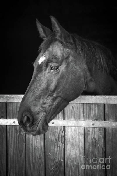 Wall Art - Photograph - Horse Portrait by Delphimages Photo Creations