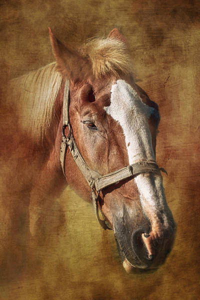 Tan Photograph - Horse Portrait II by Tom Mc Nemar