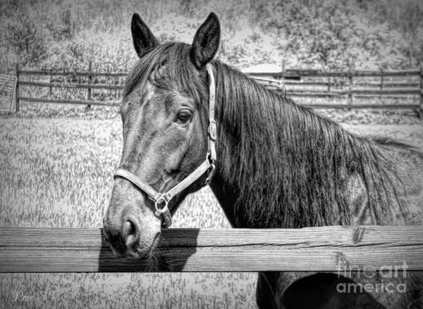 Photograph - Horse Portrait In Black And White by Rose Santuci-Sofranko