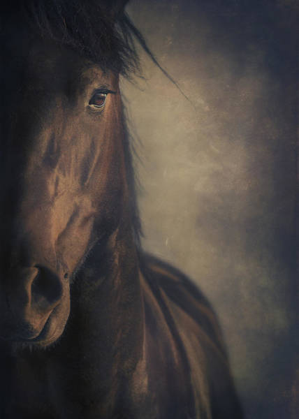 Friesian Horse Photograph - Horse Portrait by Wolf Shadow Photography