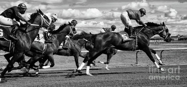 Lethbridge Photograph - Horse Power 11 by Bob Christopher