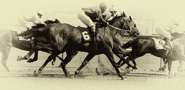 Lethbridge Photograph - Horse Power 15 by Bob Christopher