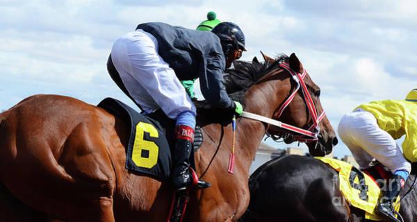 Lethbridge Photograph - Horse Power 8 by Bob Christopher