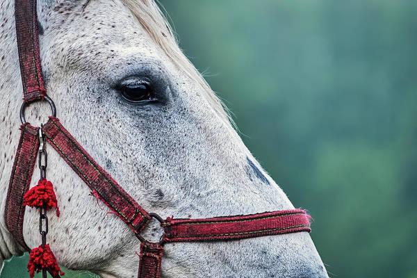Photograph - Horse Profile - Romania by Stuart Litoff