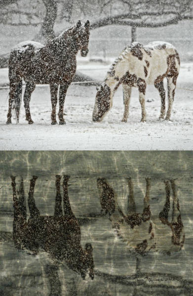 Photograph - Horse Reflections by Ericamaxine Price