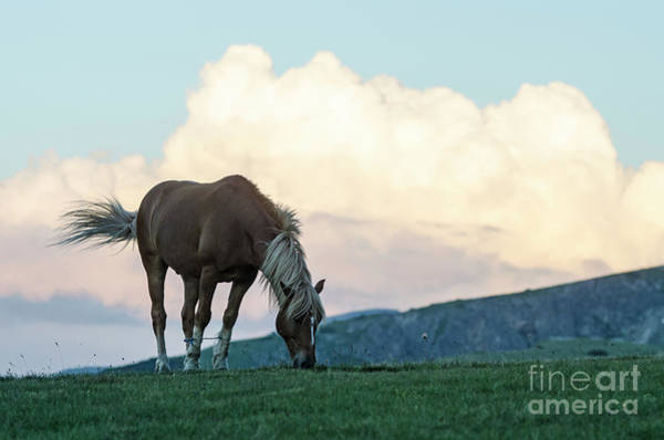 Photograph - Horse - Rila Big Sky by Steve Somerville