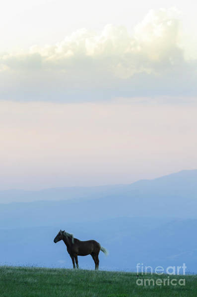Photograph - Horse - Rila Mountains by Steve Somerville